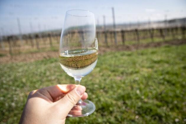 sklenka vina a vinice v pozadi v podyji