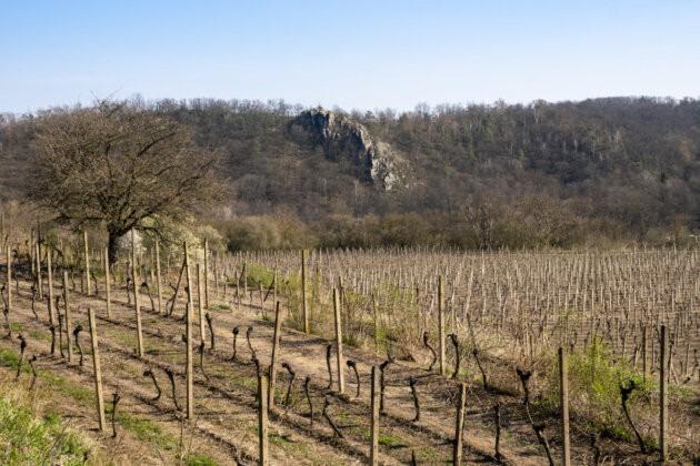 Podyji vinohrad Sobes a skala