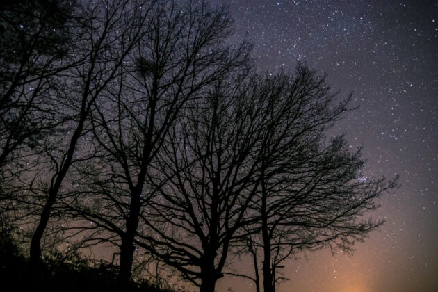 hvezdna obloha a siluety stromu