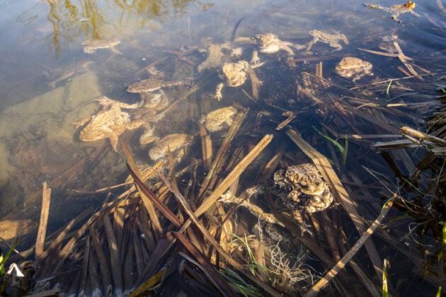 velka skupina paricich se zab ve vode