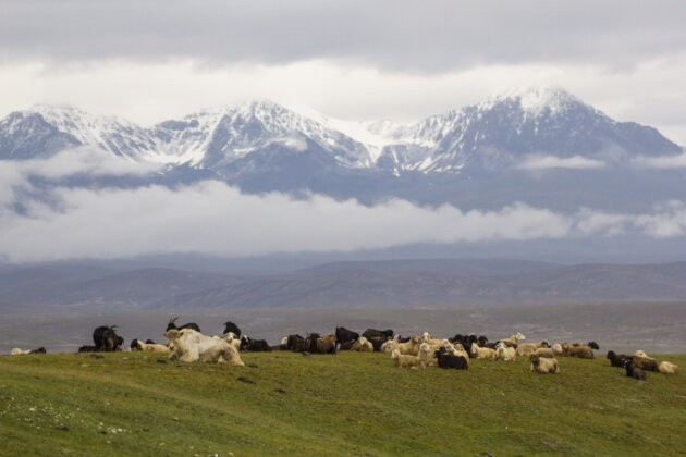 02 Zvirata Hory Kyrgyzstan