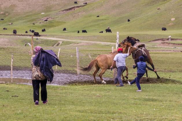 20 Rvacka Kone Kyrgyzstan