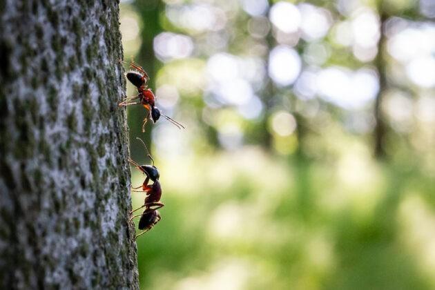 06 Mravenci Souboj