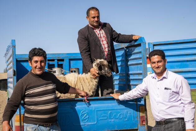 autostop s ovcí