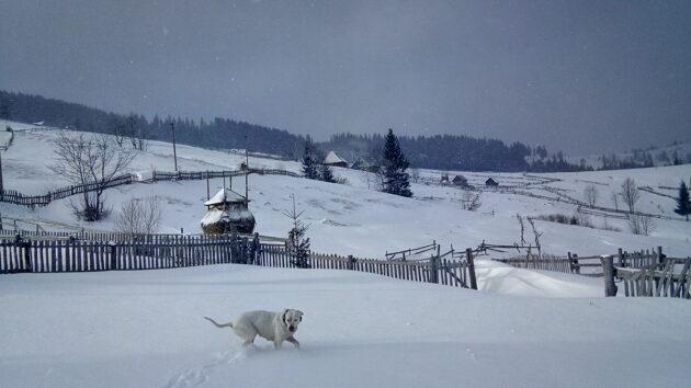 Ukrajina Zima