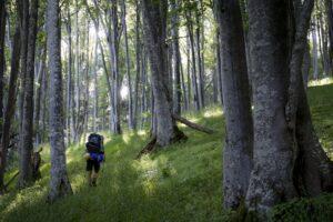 Cesta kouzelným lesem