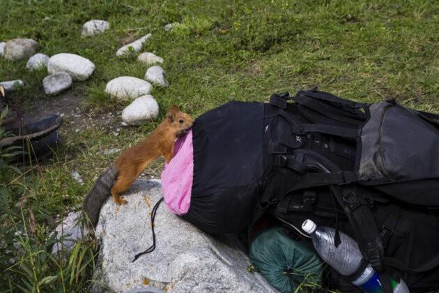 drza cervena veverka leze do batohu