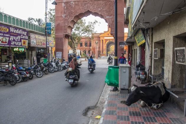 indicka ulice v amritsaru s motorkami a kravou