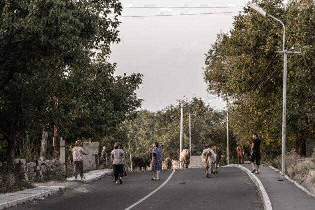 26 Armenie Kravy Na Ceste