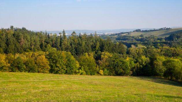 podzimni les