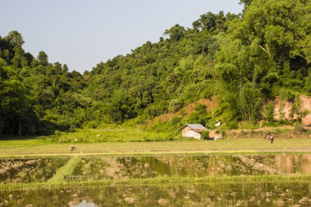 Laos Ryzove Pole Chaloupka