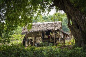 Chatrc Barma zelen strom