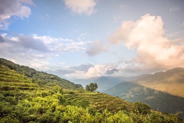 zelene terasy v horach nepal