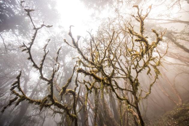 destny les v nepalu