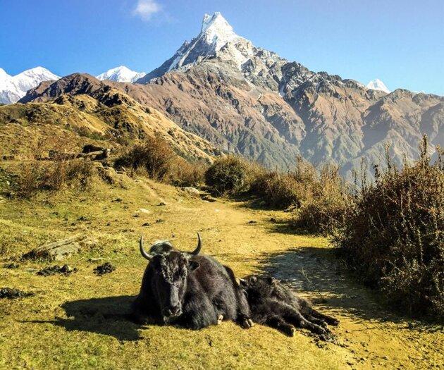 jak a kopec v himalaji