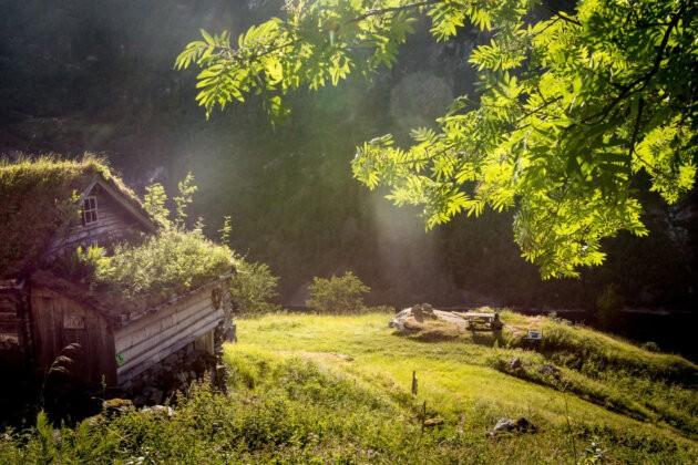 chata se strechou porostlou travou a strom norsko