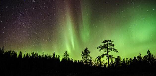 zelena polarni zare nad siluetou lesa norsko hvezdna obloha