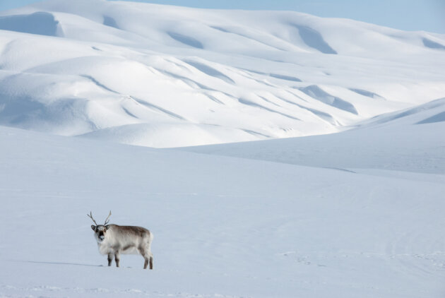 norsko zima