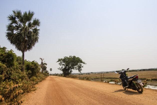 skutr na prasne ceste s jednim stromem