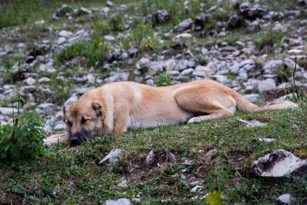 klidny hlidaci pes