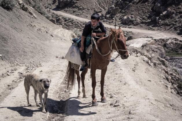 kluk na koni krici na psa