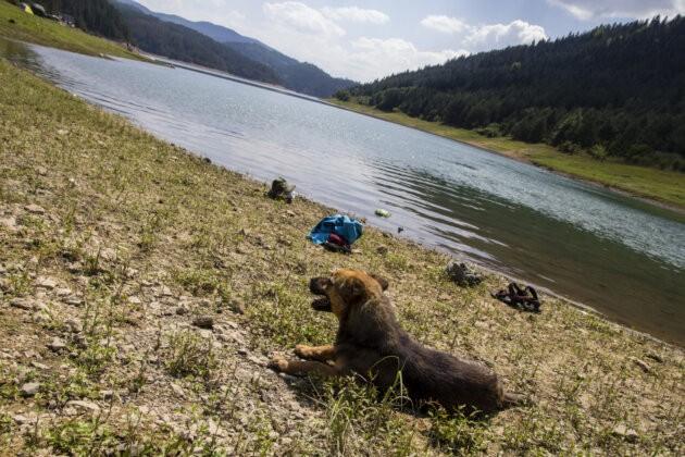 Pes U Jezera Zaovine